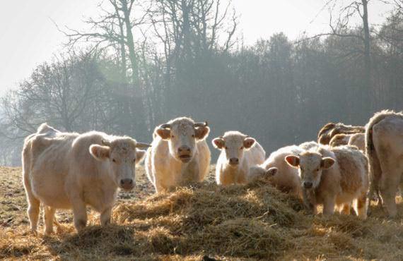 Aide aux petits investissements agricoles