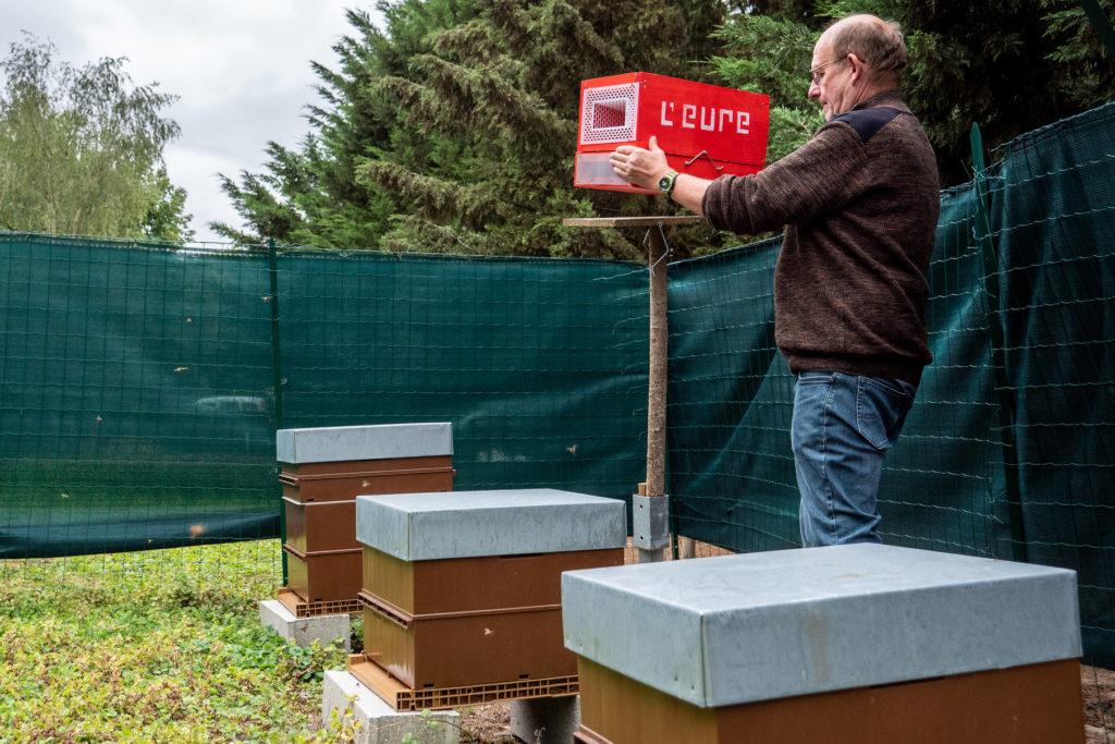 Piege à frelon asiatique dans un rucher