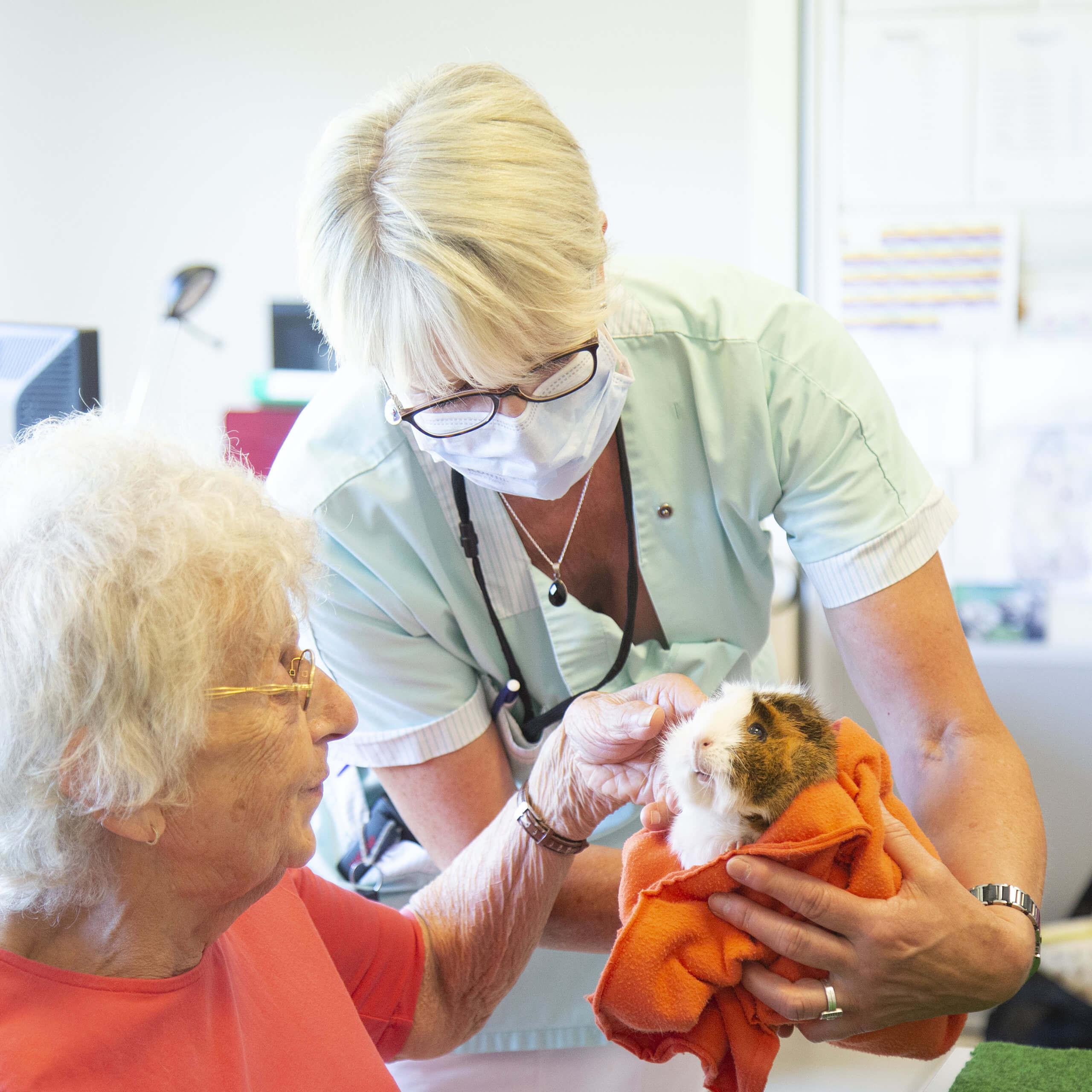 femme âgée en train de caresser un hamster tenu par une aide médical