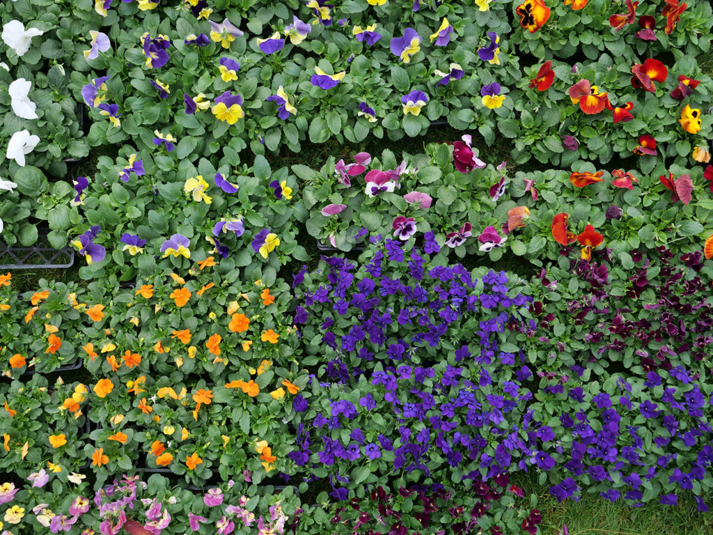 Ensemble de fleurs de toutes les couleurs